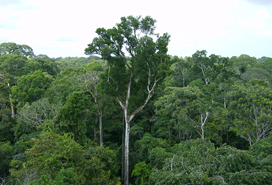 how do trees affect global warming