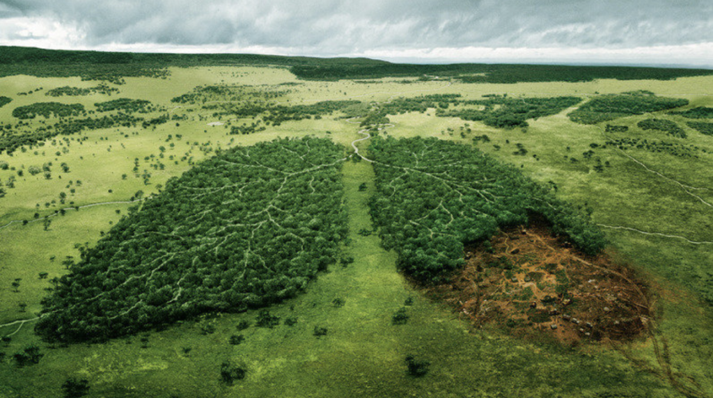 Carbon Dioxide Deforestation