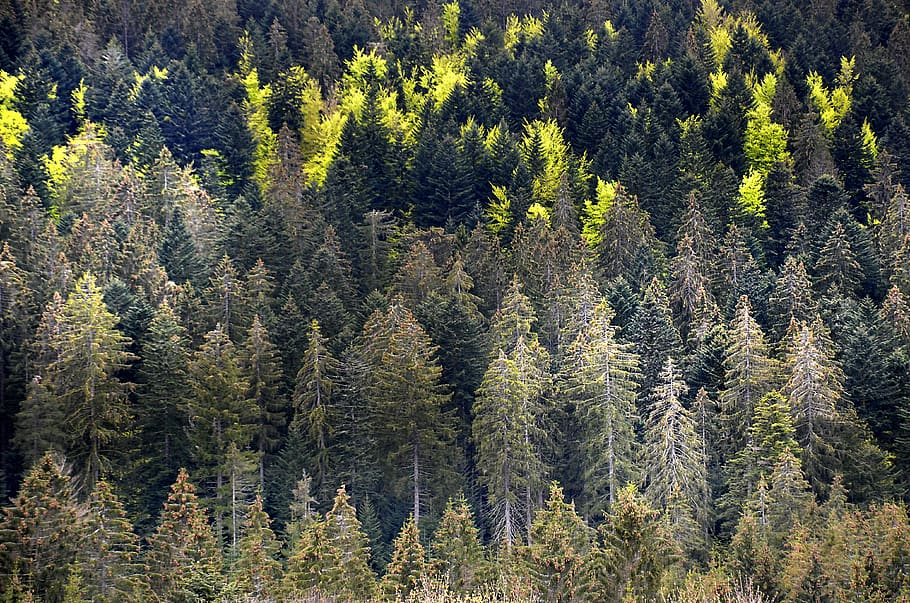 how do forests affect climate
