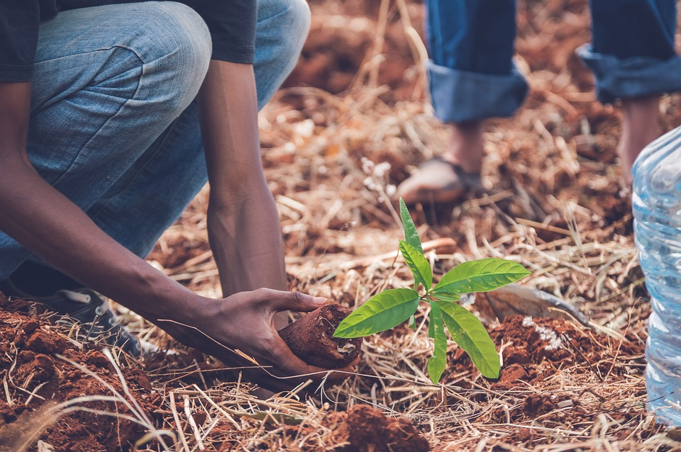 planting trees to reduce co2