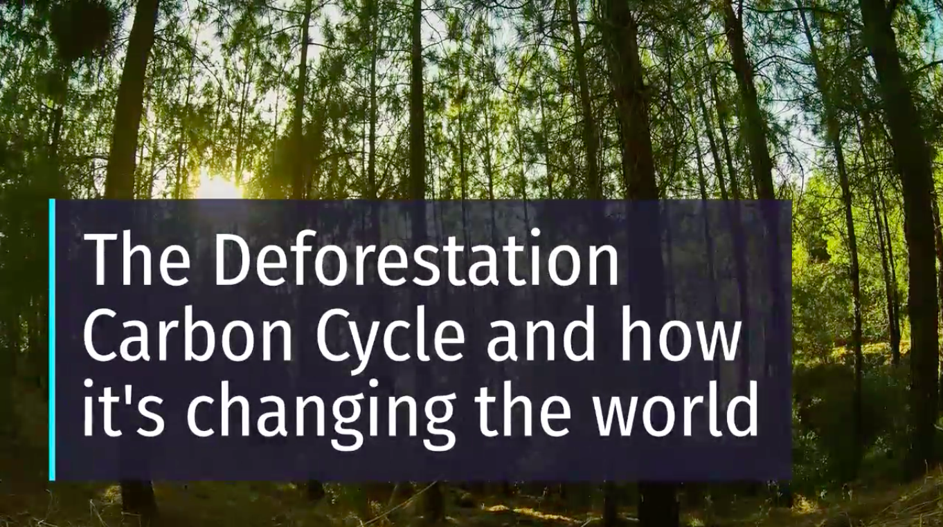 short video of How deforestation causes global warming